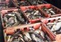В Глобинском районе задержали Renault, в котором перевозили около 300 кг рыбы