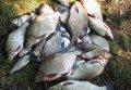 Кировоградские и полтавские браконьеры во время нереста выловили из Днепра почти 7,5 тонн рыбы