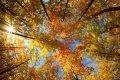 Синоптики обещают летнюю погоду в ближайшие две недели