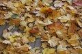 Калашник поручил убрать опавшие листья до того, как выпадет первый снег