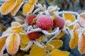 Украинский гидрометцентр предупреждает о заморозках 26 сентября