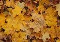 Работы по уборке Кременчуга от опавших листьев необходимо ускорить