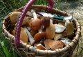 Увеличение случаев отравлений грибами санитарные врачи связывают с социально-экономической ситуацией в стране