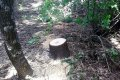В Кобелякском районе задержали «лесоруба», пилившего деревья в лесопосадках