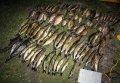 Сотрудники водной милиции задержали браконьеров с электроудочками