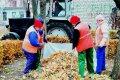 Калашник требует активизировать работы по уборке опавших листьев