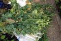 По результатам операции «МАК» в Полтавской области изъято более 27 тысяч наркосодержащих растений