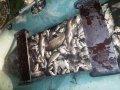 Кременчугские патрульные задержали браконьеров
