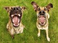 Санитарные врачи призывают кременчужан не нарушать правила поведения с животными
