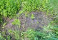 Кобелякские полицейские выявили факт незаконного выращивания конопли