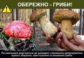 Спасатели предупреждают об опасности отравления грибами!