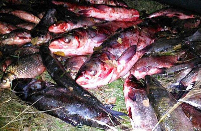 Водная полиция Кременчуга задержала троих браконьеров, выловивших сетями почти 100 кг рыбы
